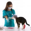 veterinario con il gatto in ambulatorio — Foto Stock #1599752