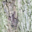 Bark of tree — Foto Stock