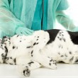 Vet With Dog In Surgery - Stockfoto