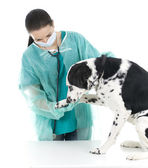 Vet With Dog In Surgery — Stock Photo