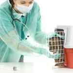 veterinář s kočkou v chirurgii — Stock fotografie