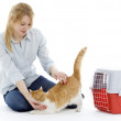 Young woman plaing with cat — Stock Photo #2166198