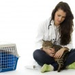 Female vet with cat — Stock Photo #2254856
