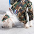 Chinese Crested set two - 