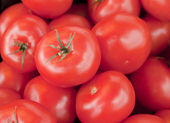 Tomatoes set eight — Stock Photo
