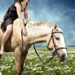 Feeding of the horse — Stock Photo