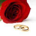 jedna róża i dwie obrączki — Zdjęcie stockowe