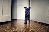 Small funny dog — Stock Photo