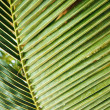 Palm leaf - Stockfoto