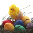 Easter basket with eggs and chicks — Stock Photo