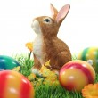 Easter bunny with eggs on a lawn — Stock Photo