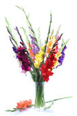 Gladiolas — Stock Photo