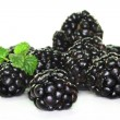 Blackberries — Stock Photo #2580430