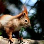 écureuils — Photo