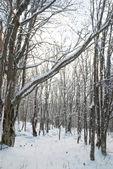 冬の氷の森 — ストック写真
