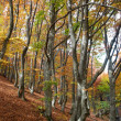 Autumn forest — Stock Photo #1643759