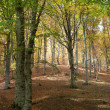 Autumn forest — Stock Photo #1649805