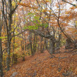 autumn forest — Stock Photo
