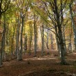 Autumn forest — Stock Photo #1658931