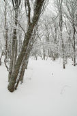 Winter landscape with icy trees. — Stock Photo