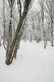 氷のような木と冬の風景. — ストック写真