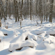 Winter icy forest — Stock Photo #1687802
