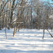 Winter icy forest — Stock Photo #1688000