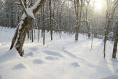 Winter icy forest — Stockfoto