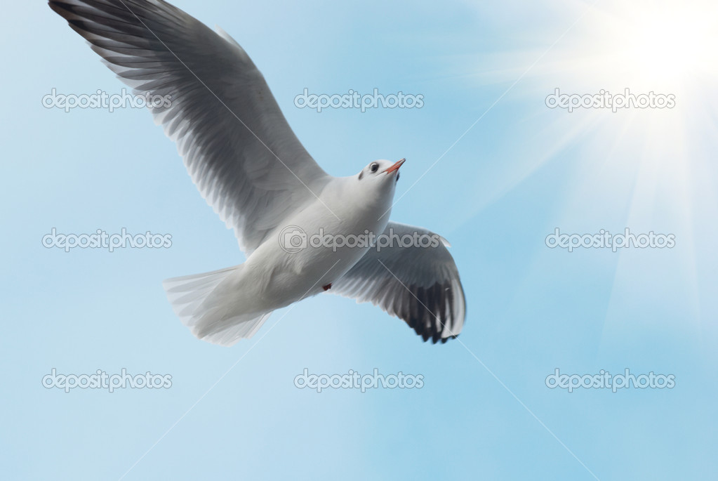 Sun and seagull on the blue background. — Stock Photo #1958617