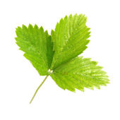 Strawberry's green leaf — Stock Photo