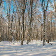 Winter icy forest - Stock Photo