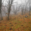 Autumn misty forest with fallen leaves. - Stock Photo