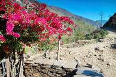 Red flowers in Tibetan village — Stock Photo
