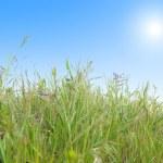 hierba verde con azul cielo soleado — Foto de Stock   #2334000