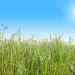hierba verde con azul cielo soleado — Foto de Stock   #2527641