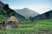Rice fields in the himalayan hills — Stock Photo
