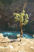Träd ovan marsyangdi floden, tibet. — Stockfoto