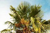 Palm tree. — Stock Photo