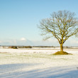 Solitary Tree — Stock Photo #1617491