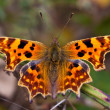 Stock Photo: CommButterfly