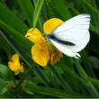 White butterfly — Stock Photo