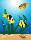 Exotic fish under water — Stock Vector