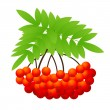 Royalty-Free Stock Imagen vectorial: Ashberry
