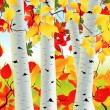 Royalty-Free Stock Vector Image: Birch grove