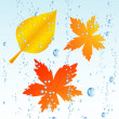 Royalty-Free Stock Vector Image: Autumnal leaf in the rain