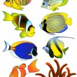 Exotic fish — Stock Vector