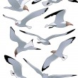 Sea_gulls — Stock Vector