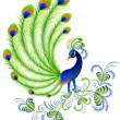 Royalty-Free Stock Vector Image: Peacock