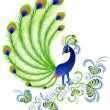 Peacock — Stock Vector #1638597