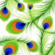 Peacock feather background — Stockvectorbeeld